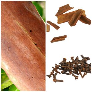 cedar cinnamon clove